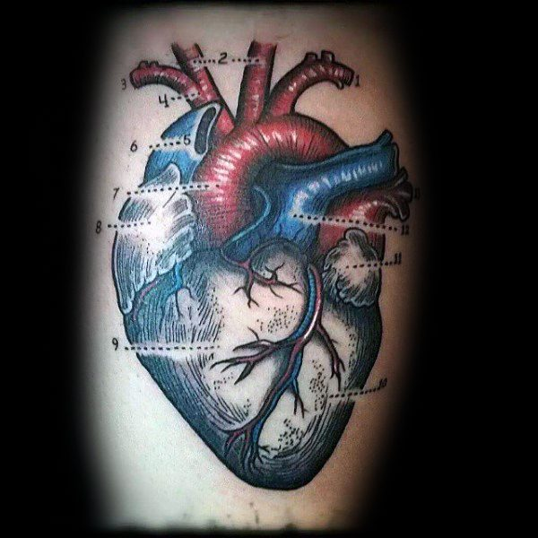 70 anatomische Tattoos für Männer - Körperstruktur Design-Ideen