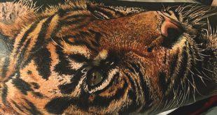 100 Tiger Tattoo Designs für Männer - König der Tiere und der Dschungel