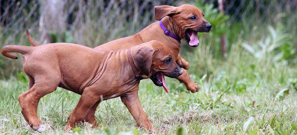 Top 38 besten Hunderassen für Männer - Treffen Sie den besten Freund des Menschen