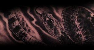 60 Klapperschlange Tattoo-Designs für Männer - Manly Ink Ideen
